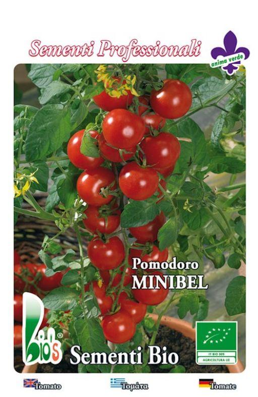 Rajčica MAREMMANO cherry Cijena