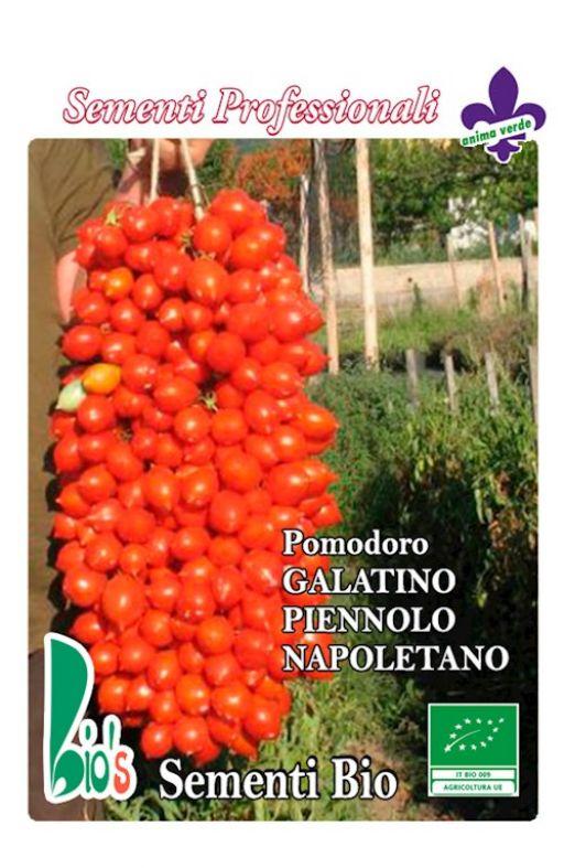 Rajčica GALATINO (PIENNOLO NAPOLETANO) Cijena