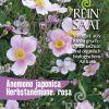 ANEMONA Anemona japonica