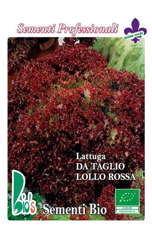 Salata LOLLO ROSSA - za rezanje Cijena