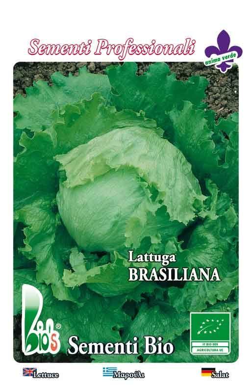 SALATA BATAVIA BRASILIANA Cijena