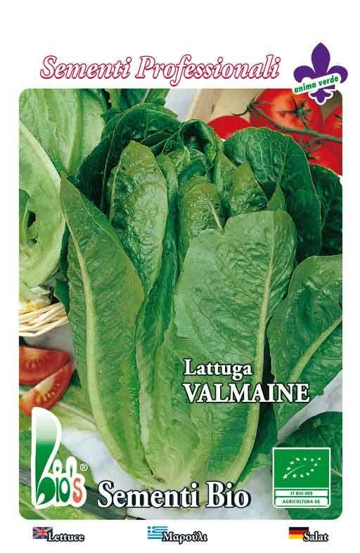 ROMANA VALMAINE - salata Cijena