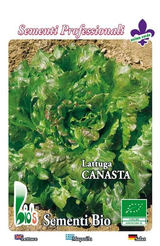 BATAVIA CANASTA - salata Cijena