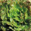 Salata BATAVIA CANASTA