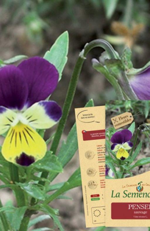 MAĆUHICA Viola tricolor Cijena
