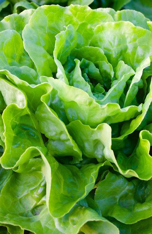 Salata PUTERICA KS ESTIVA Cijena