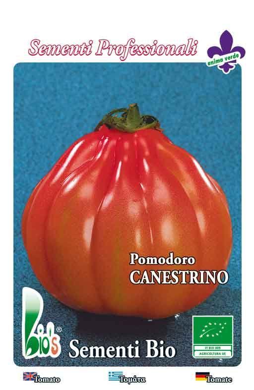 Rajčica CANESTRINO Cijena