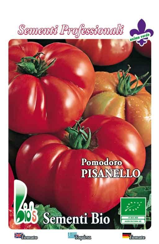 Rajčica COSTOLUTO FIORENTINO PISANELLO Cijena
