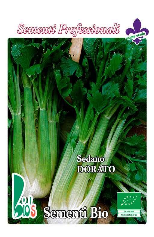 Celer DORATO / VALDARNO Cijena