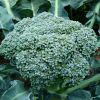 Brokula RAMOSO CALABRESE - rana