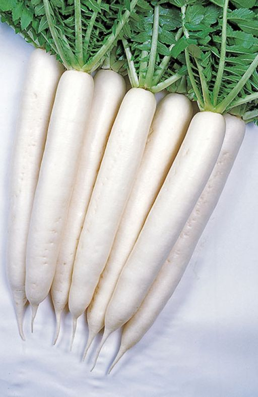 DAIKON MINOWASE SUMMER CROSS Cijena