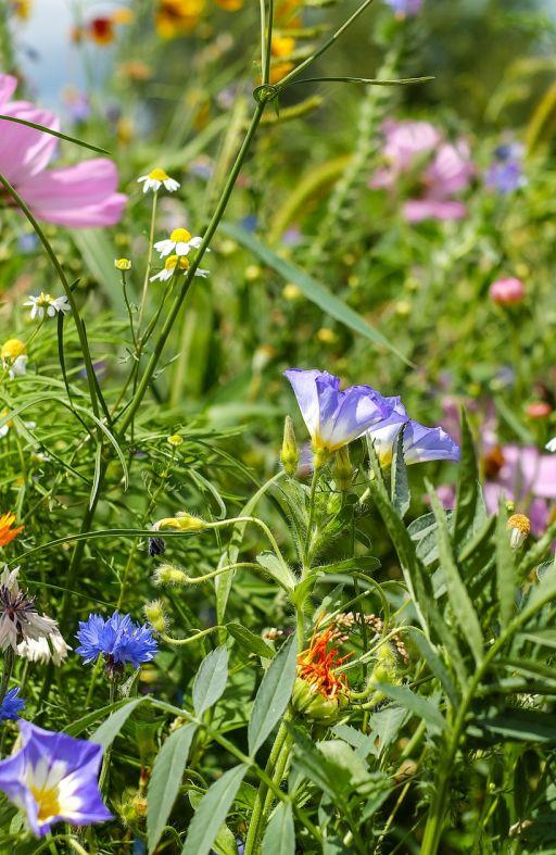 Zelena gnojidba SMJESA PČELA Cijena