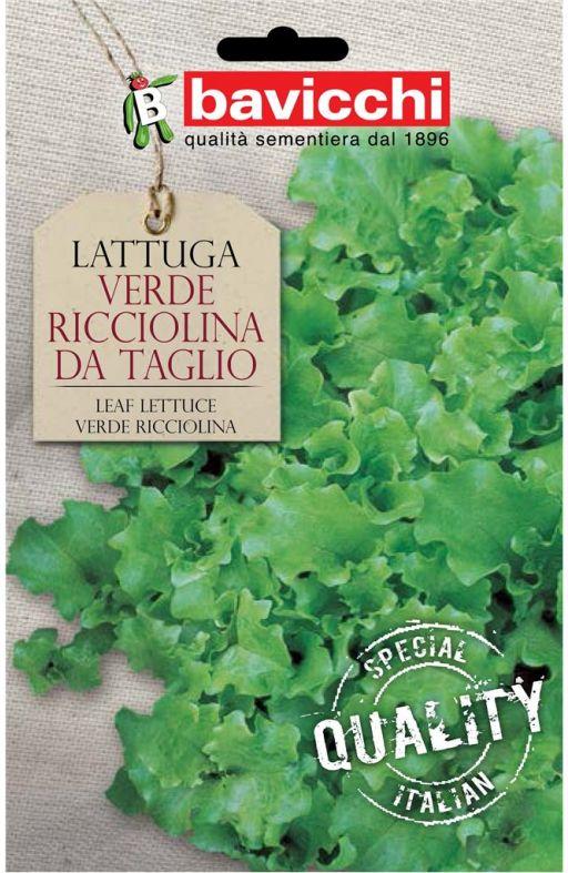 Salata RICCIOLINA TRIESTE - za rezanje Cijena