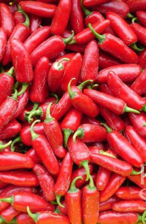 Chili paprika JALAPENO RUBEN Cijena