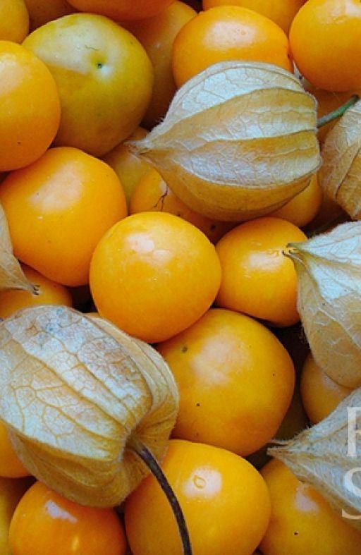 Peruanska jagoda SCHONBRUNNER GOLD Cijena