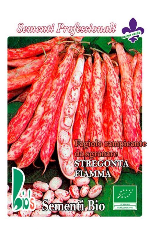 Grah STREGONTA (FIAMMA) - visoki Cijena