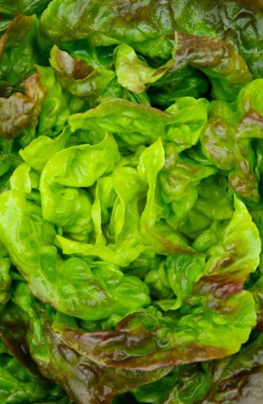 Salata PUTERICA ČUDO 4 SEZONE Cijena