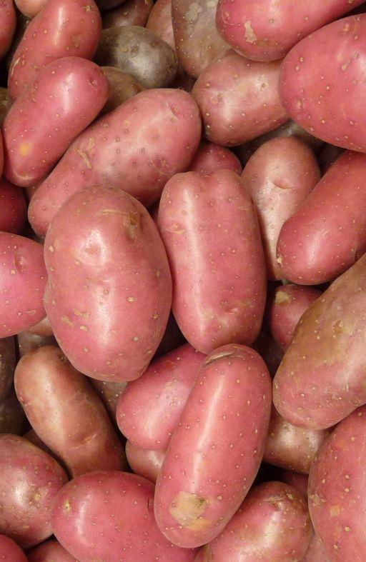 Krumpir crveni LAURA Cijena